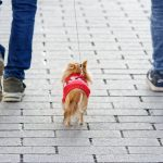 animales Sabadell Ordenanza protección