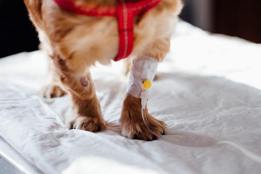¿Qué hacer si he sufrido una negligencia veterinaria?